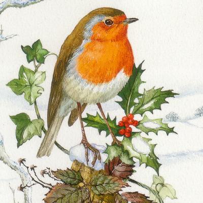 画像1: クリスマスカード:Robin on a Holly Branch by Margery Stephenson (1)